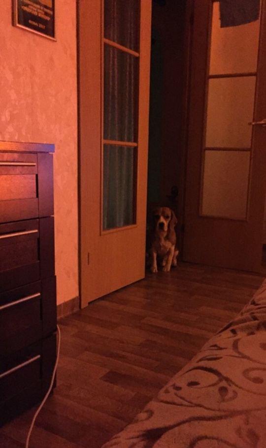 1к квартира ул. 9 Мая, 51 | 17000 | аренда в Красноярске фото 1